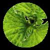 herba-ikone7