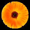 herba-ikone8